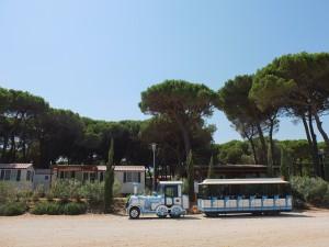 Pineta sul Mare 2012 037